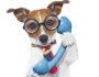 phone call dog